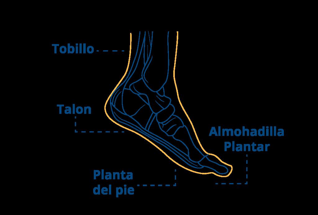partes-del-pie-correr-blog-ceapie